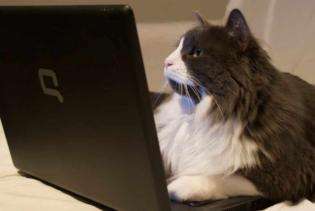 cat on computer to publish